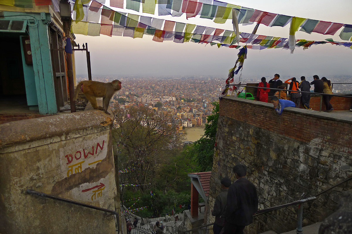 A view of a city in the distance below with a monkey leaning over a ledge on the left and people on a ledge on the right with prayer flags strewn between